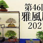 Gafuten 2021