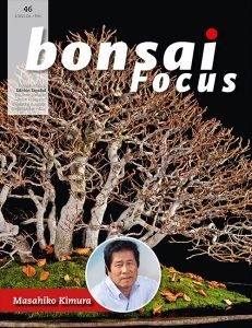 Bonsai Focus 46 Edición Español