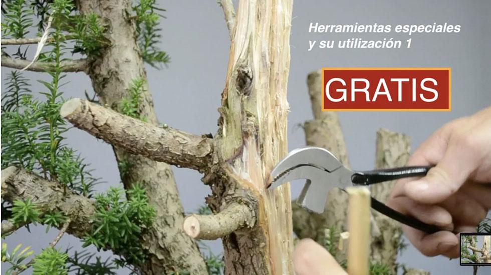 Curso World Bonsái Universitu(WBU): herramientas madera