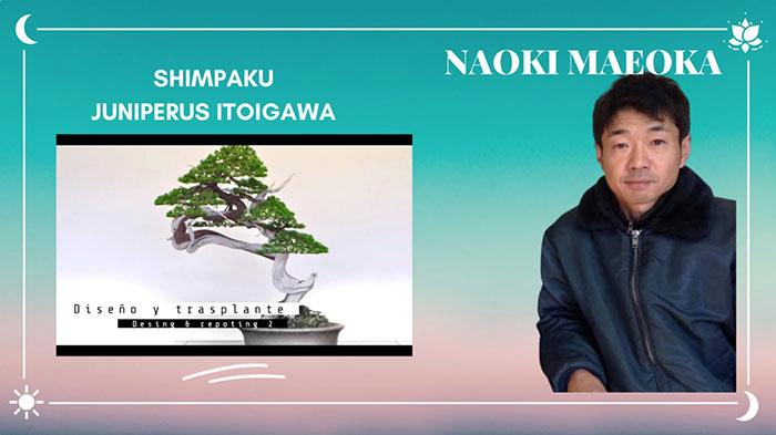 Shimpaku itoigawa