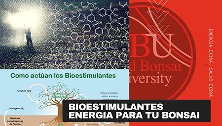 Curso World Bonsái Universitu(WBU): bioestimilantes, energía para tu bonsái