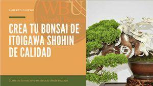Curso World Bonsái Universitu(WBU): crea tu bonsái itoigawa shohin de calidad