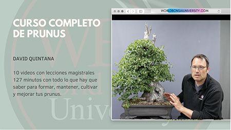 Curso World Bonsái Universitu(WBU): curso completo de prunus
