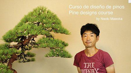 Curso World Bonsái Universitu(WBU): curso de diseño pino blanco