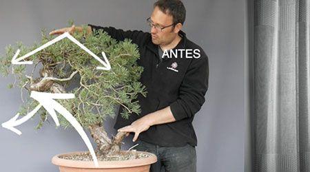 Curso World Bonsái Universitu(WBU): curso completo de formación y modelado inicial del pino sylvestre