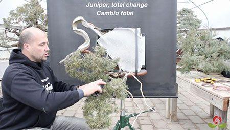 Curso World Bonsái Universitu(WBU): masterclass diseño de rocky mountain juniper