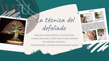 Curso World Bonsái Universitu(WBU): la técnica del defoliado
