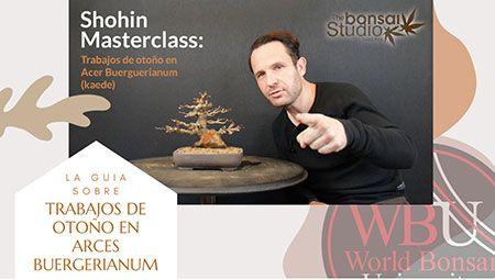 Curso World Bonsái Universitu(WBU): trabajos de otoño en arces burgerianum