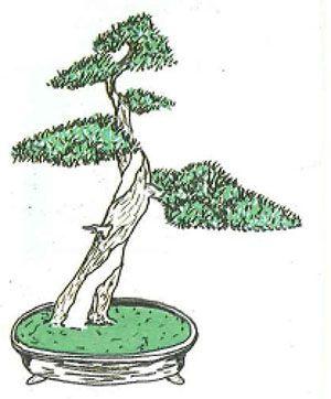 Los estilos de bonsái: bankan o estilo tronco pelado y curvo