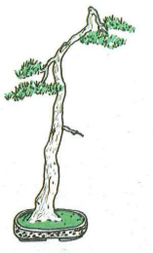 Los estilos de bonsái: bungin o estilo literati