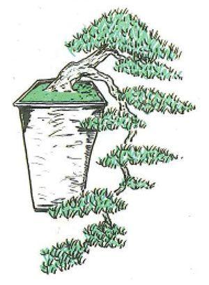 Los estilos de bonsái: kengai o estilo cascada