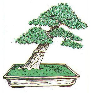 Los estilos de bonsái: shakkan o estilo inclinado