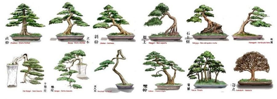 Los estilos de bonsai