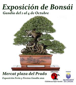 Exposición Club Bonsai Safor Gandia