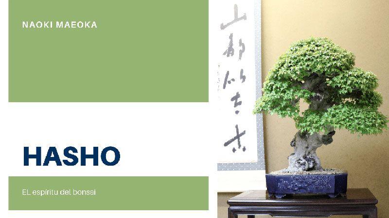 Hasho, el espíritu del bonsái