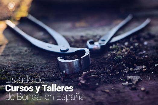 Listado de Cursos y Talleres de Bonsái en España